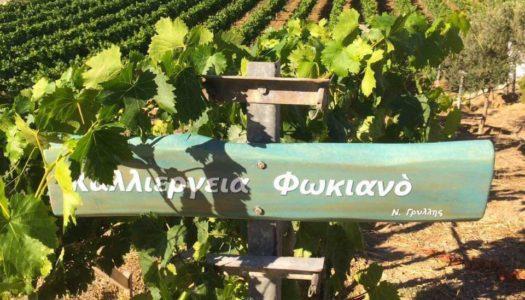 ΔΗΜΟΣ ΛΕΙΨΩΝ: Ο βραβευμένος οίνος των Λειψών «ταξιδεύει» σε όλο τον κόσμο!