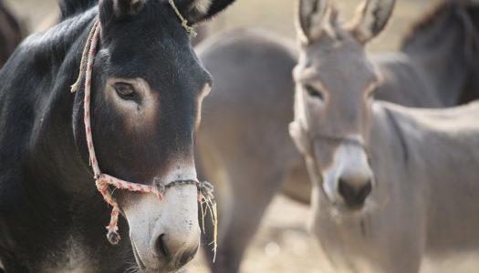 Νέα συνεργασία για τα ζώα στην Κάρπαθο: GAFW και Φιλοζωική Δράση Καρπάθου